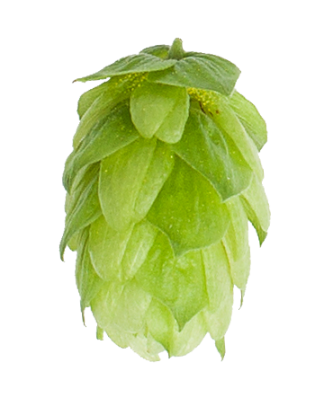 columbus-hop-cone