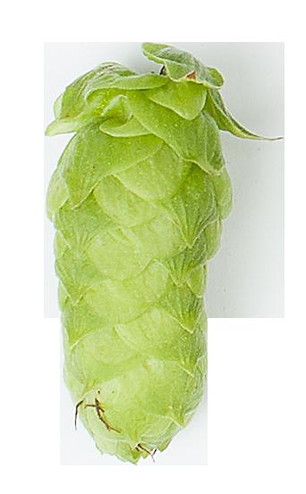 Mandarina-Bavaria